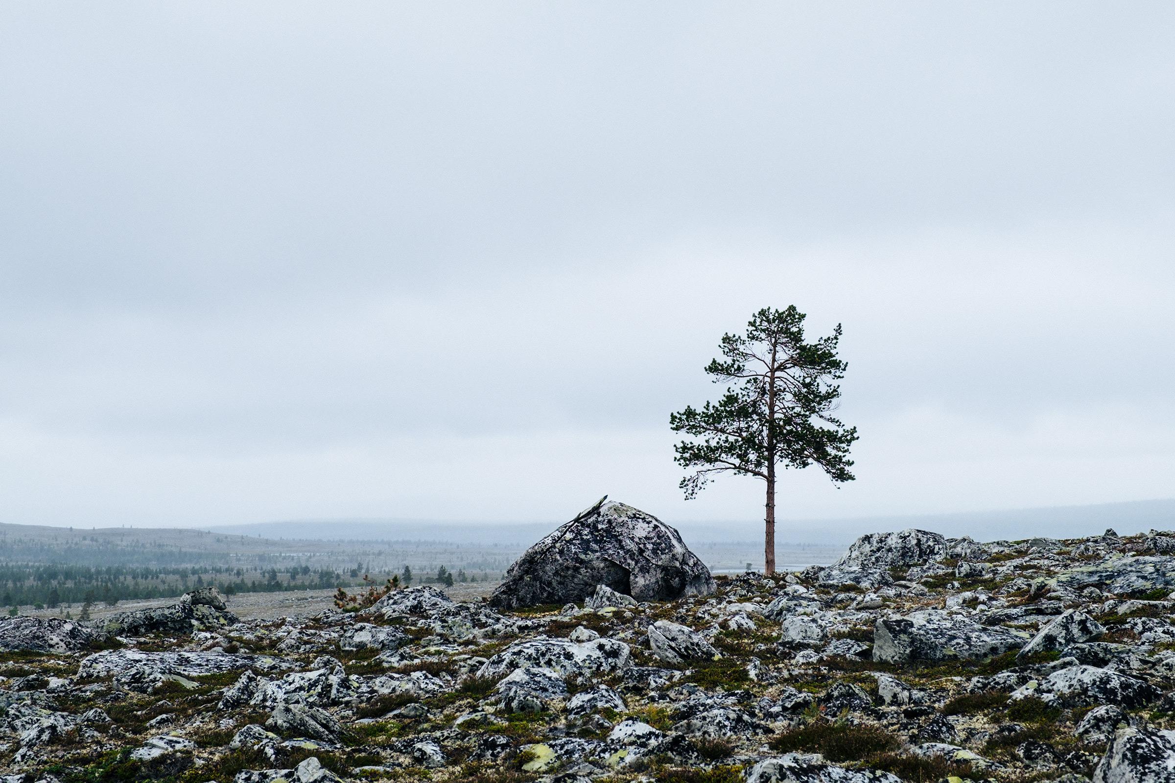Femundsmarka, Norwegen, Foto: Martin Hülle