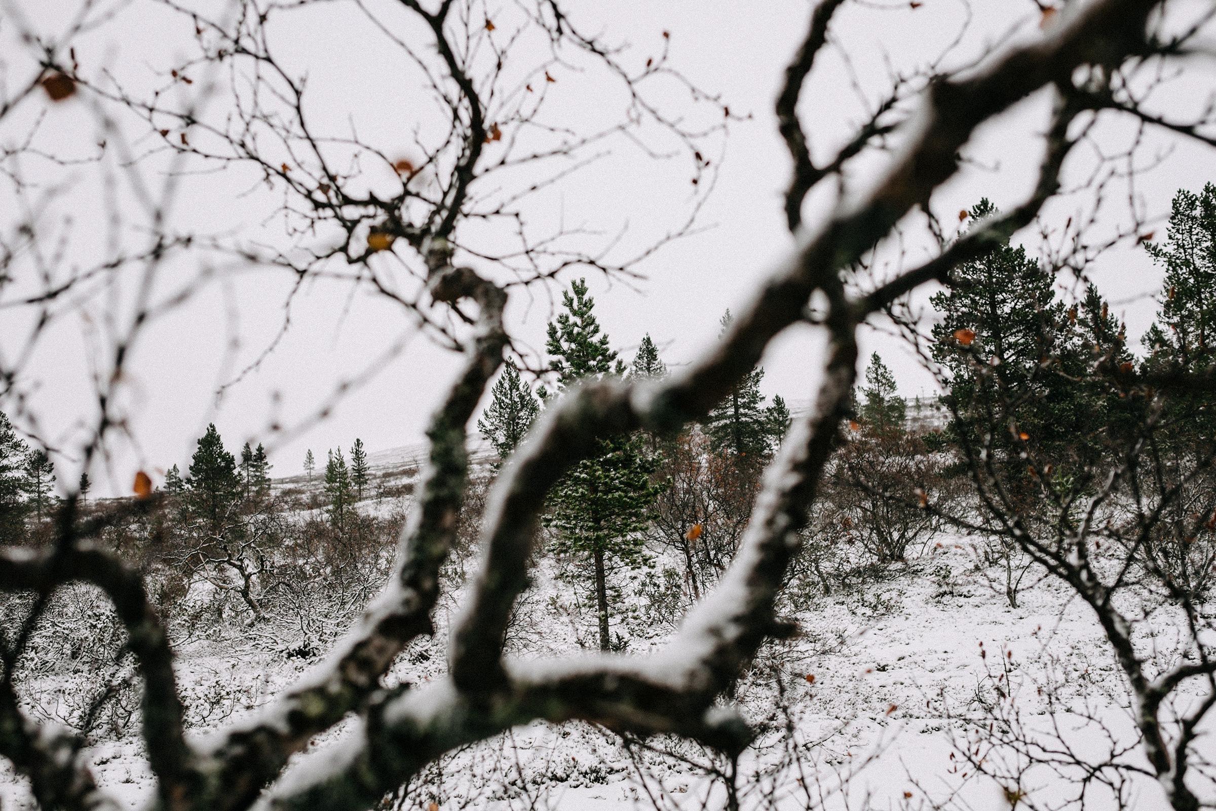 Finnland, 2014 – In die Wildnis, Foto: Martin Hülle