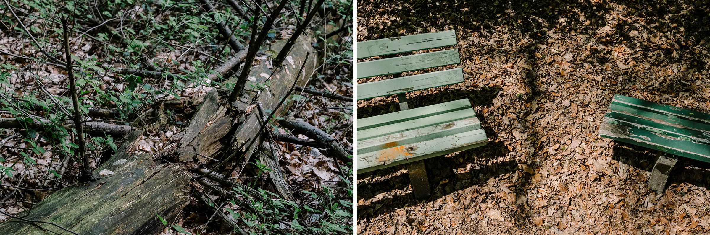 Fotokurs Wald. Wasser. Wurzel., Fotos: Martin Hülle