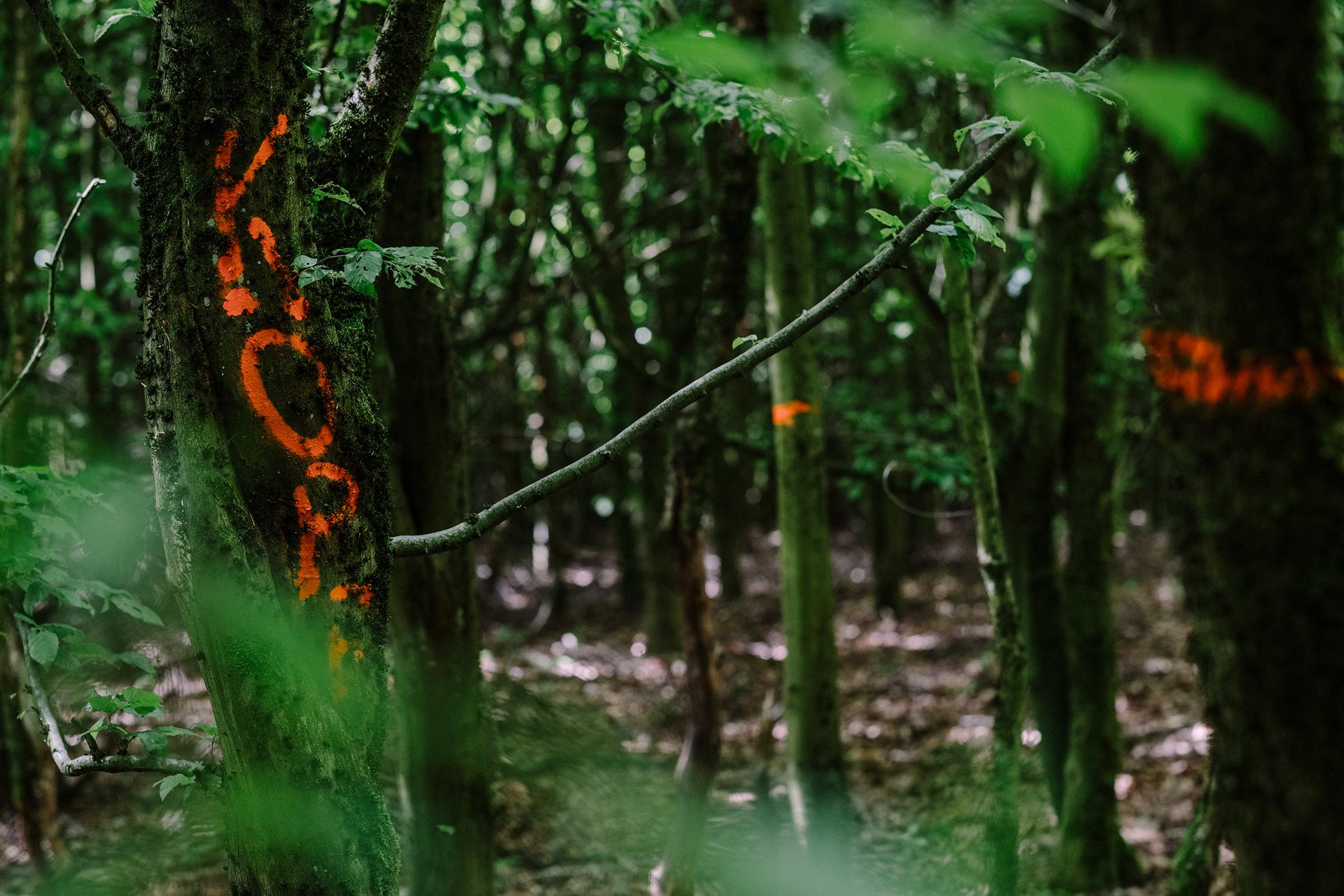 Fotoworkshop Wald. Wasser. Wurzel., Foto: Martin Hülle