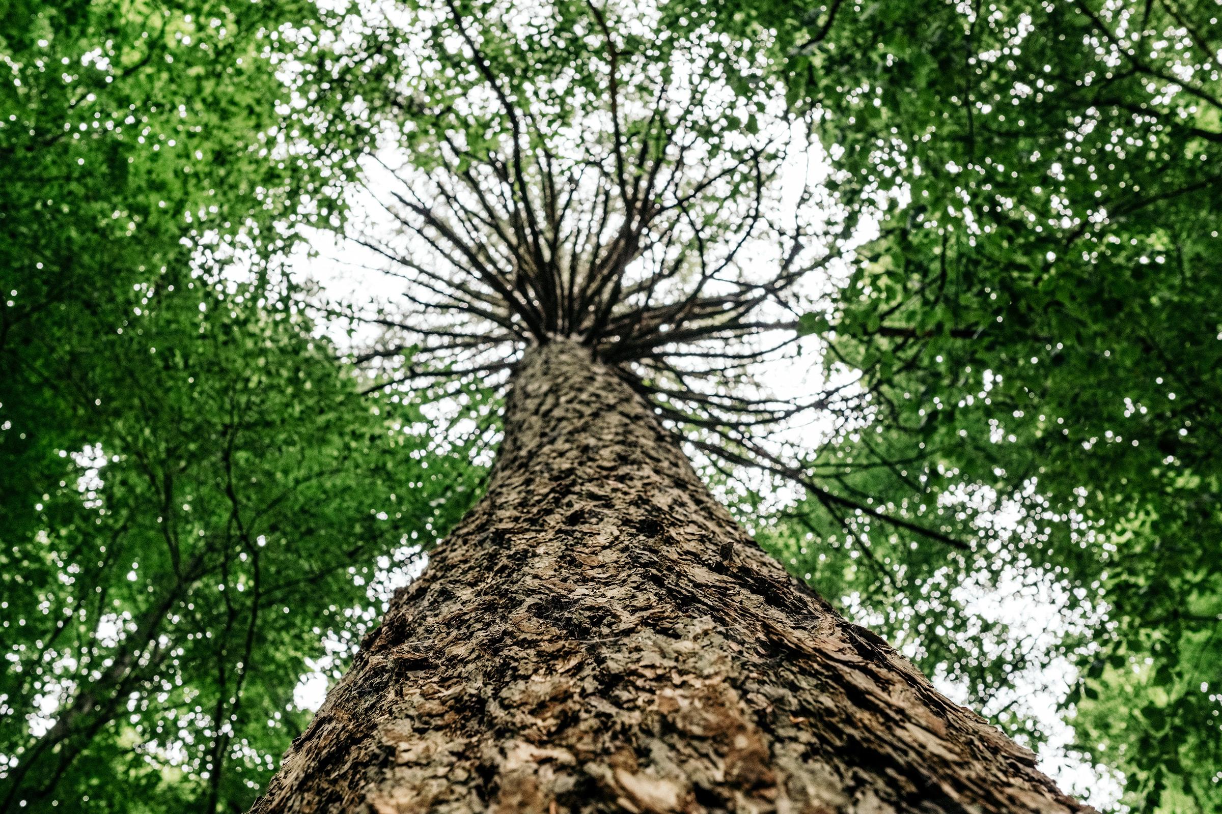 Workshop Wald. Wasser. Wurzel., Foto: Martin Hülle